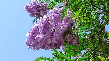 P&C-árboles-nativos